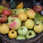 Korb gefüllt mit Äpfeln