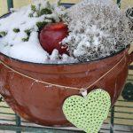 Topf bepflanzt und schneebedeckt