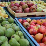Kisten mit Birnen und Äpfeln
