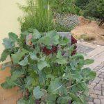 Hochbeet Kubi schön bepflanzt