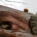Apfel trifft Holzwurm